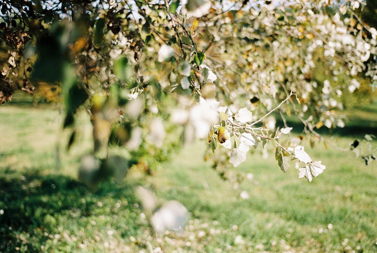 View More: http://giovannaaprili.pass.us/film