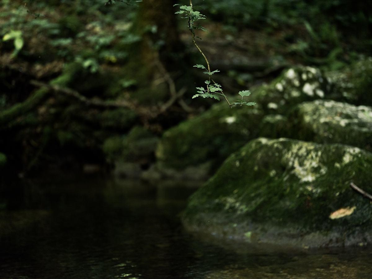 Werifesteria progetto personale, Werifesteria – un progetto personale