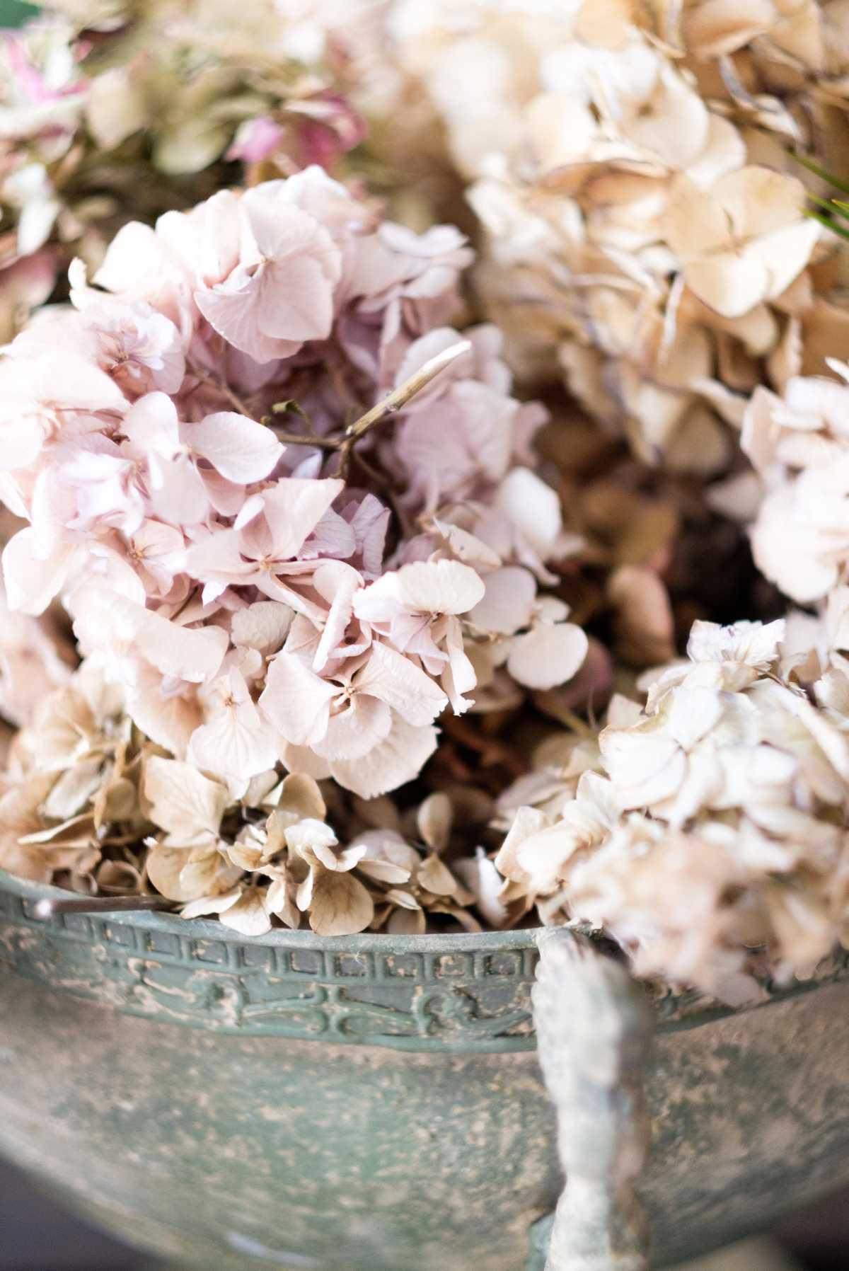 Foto di dettaglio di ortensie rosa in vaso